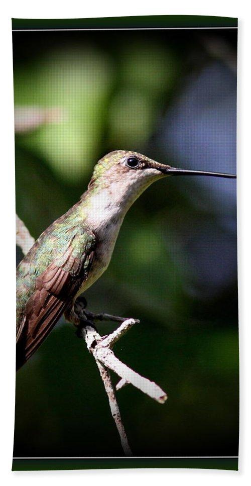 Hummingbird Bath Sheet featuring the photograph Ruby-throated Hummingbird - Just Beautiful by Travis Truelove