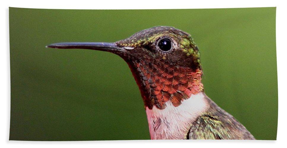 Hummingbird Bath Sheet featuring the Ruby-throated Hummingbird - Macho Man by Travis Truelove