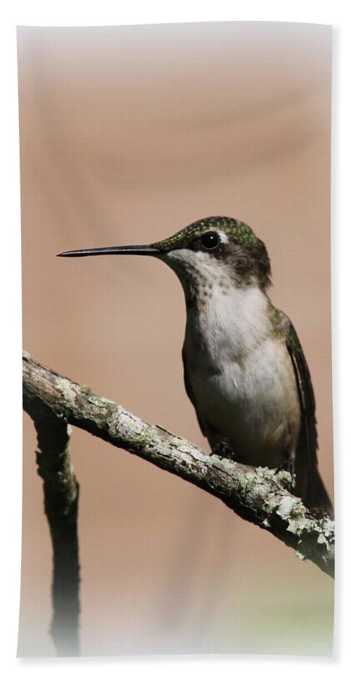 4x6 Bath Sheet featuring the photograph Ruby-throated Hummingbird - Totally Innocent by Travis Truelove