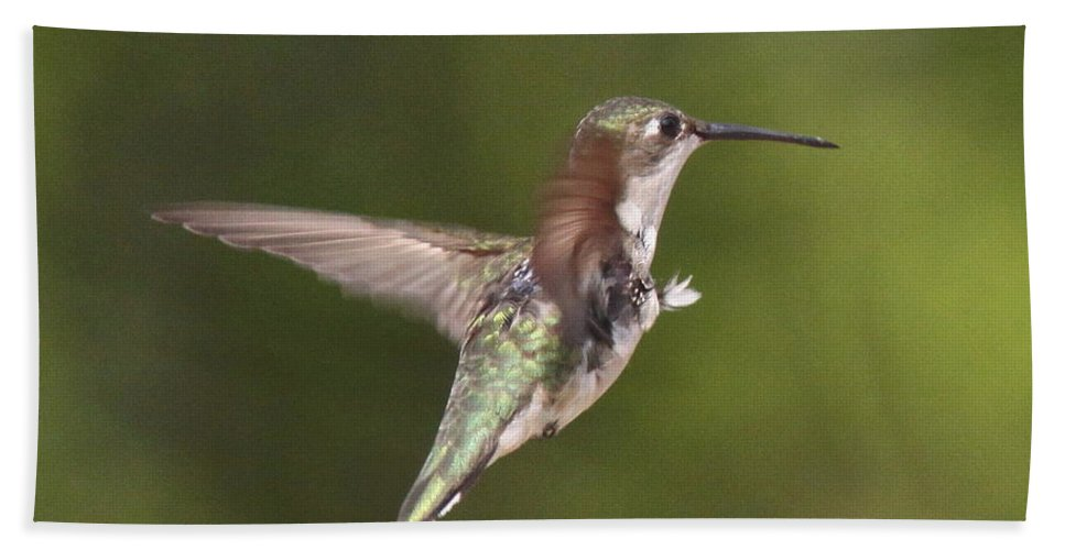 Hummingbird Bath Sheet featuring the photograph Ruby-throated Hummingbird - Twirling by Travis Truelove