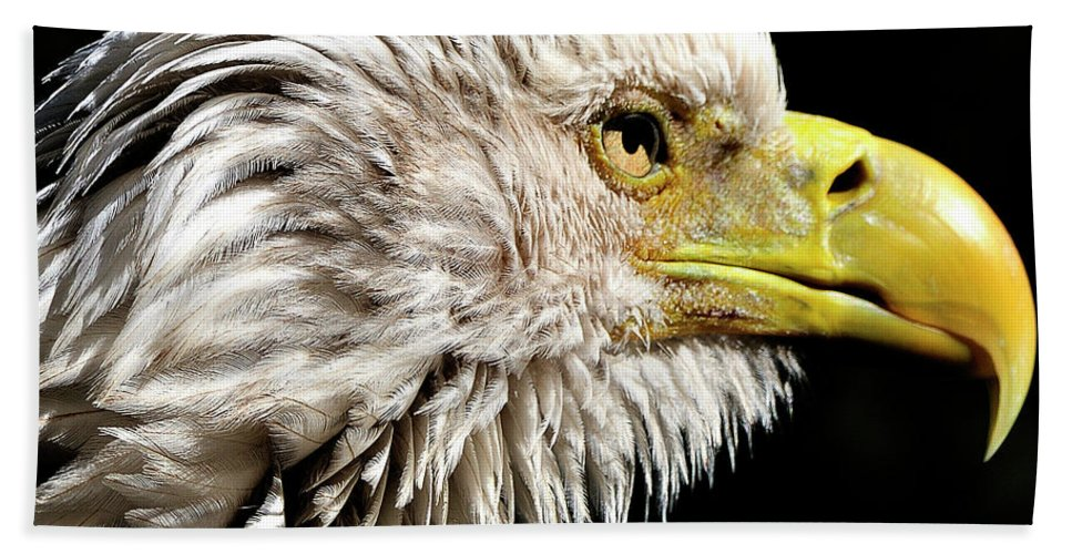 Bald Hand Towel featuring the photograph Ruffled Bald Eagle by Bill Dodsworth