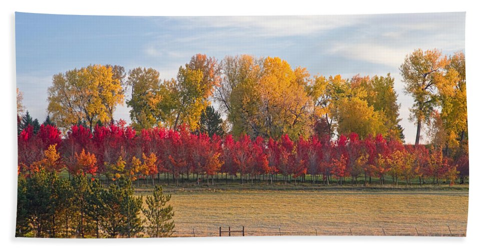 Colorful Hand Towel featuring the photograph Rural Country Autumn Scenic View by James BO Insogna