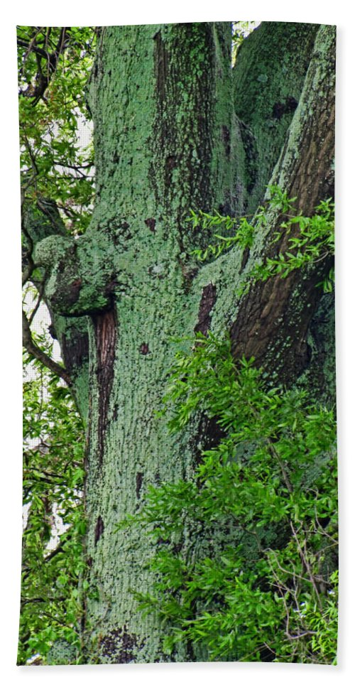 Bath Sheet featuring the photograph Rural Trees Close Up by Debbie Portwood