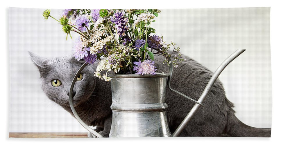 Cat Hand Towel featuring the photograph Russian Blue 03 by Nailia Schwarz