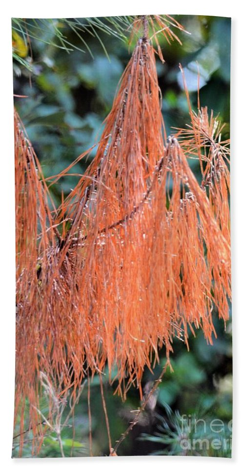 Rusty Needles Hand Towel featuring the photograph Rusty Needles by Maria Urso