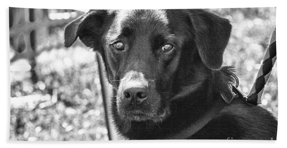 Dog Bath Sheet featuring the photograph Sad Eyes by Eunice Gibb