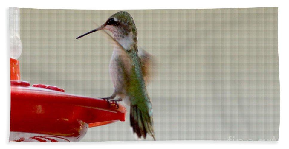 Birds Hand Towel featuring the photograph Safe Landing by Lori Tordsen
