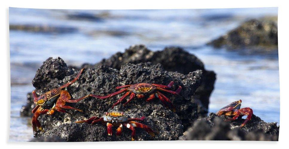 Sally Lightfoot Crabs Bath Sheet featuring the photograph Sally Lightfoot Crabs by Sally Weigand