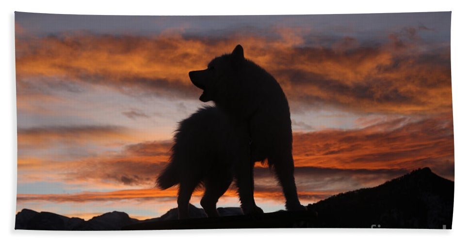 Animal Hand Towel featuring the photograph Samoyed At Sunset by Kent Dannen and Photo Researchers