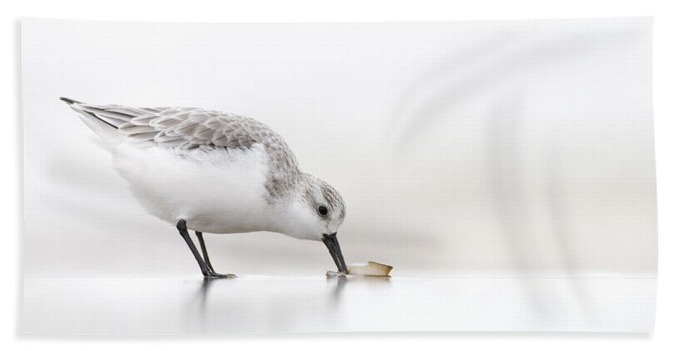 Fn Hand Towel featuring the photograph Sanderling Calidris Alba Foraging by Marcel van Kammen