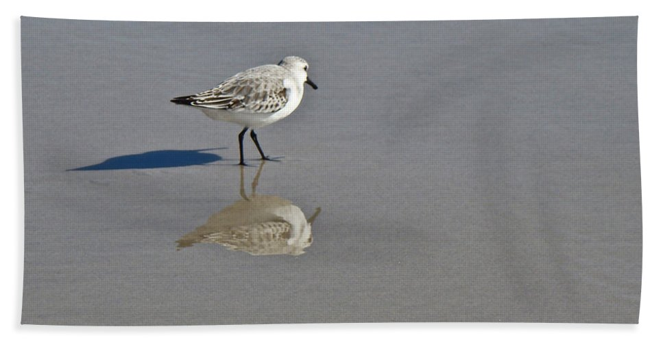 Sandpiper Bath Sheet featuring the photograph Sanderling Sandpiper - Calidris Alba by Mother Nature