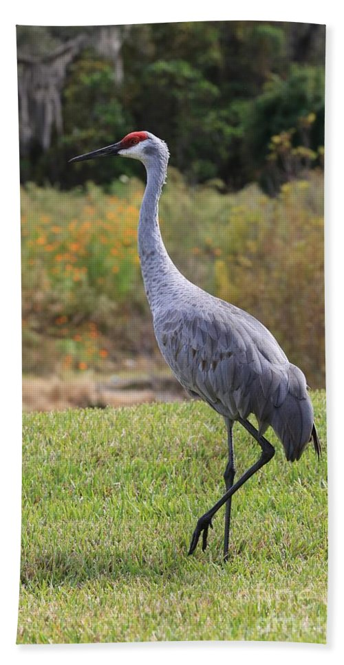 Sandhill Crane Bath Sheet featuring the photograph Sandhill In The Grass With Wildflowers by Carol Groenen