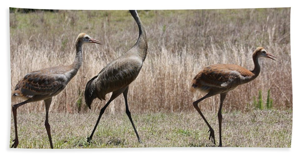 Sandhill Cranes Hand Towel featuring the photograph Sandhill Parade by Carol Groenen