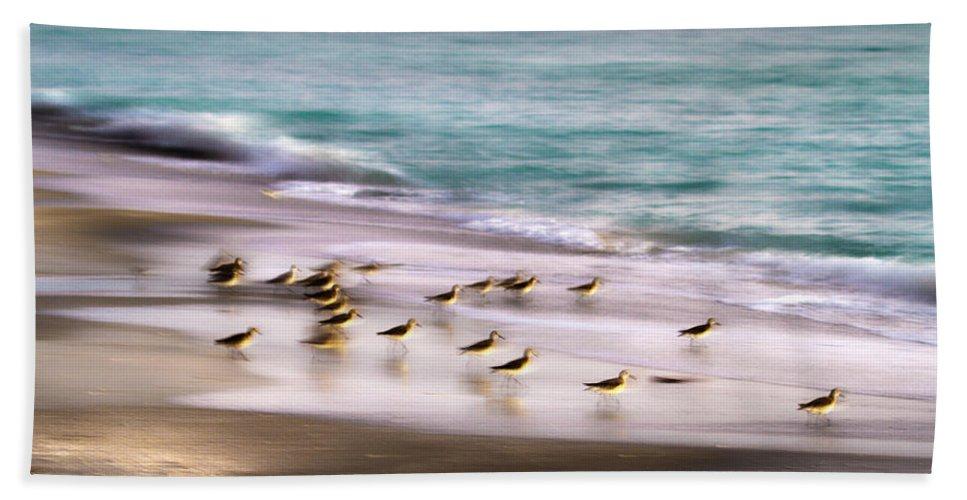 Bird Bath Sheet featuring the photograph Sandpiper Evening by Betsy Knapp