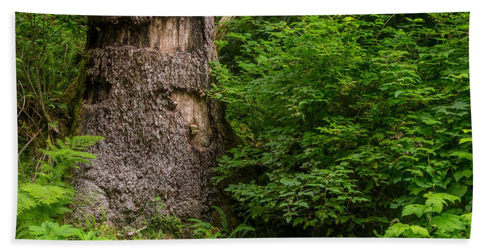 Fern Canyon Hand Towel featuring the photograph Sasquatch Rubbing Tree by Greg Nyquist
