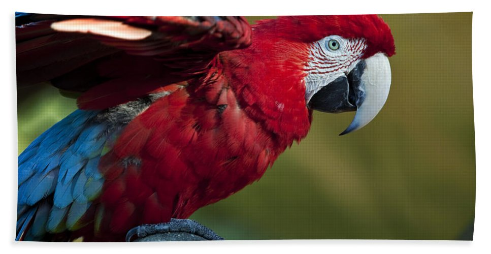 Bird Hand Towel featuring the photograph Scarlet Macaw by Amy Jackson