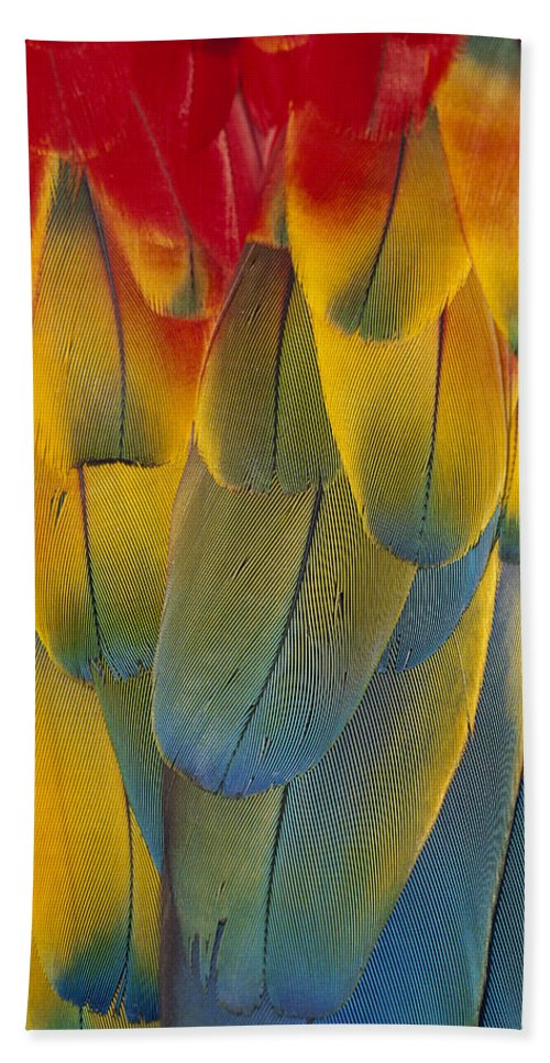 Mp Hand Towel featuring the photograph Scarlet Macaw Ara Macao Close-up by Michael Durham