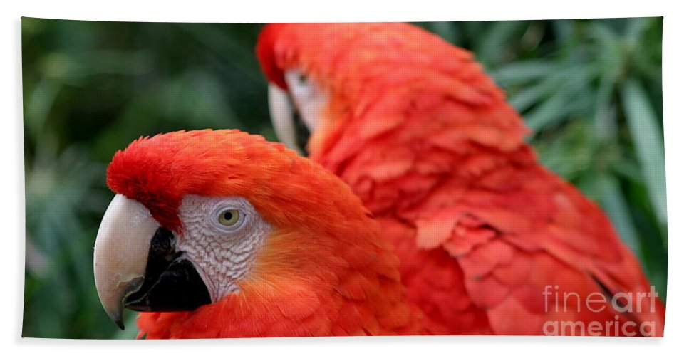 Red Bath Sheet featuring the photograph Scarlet Macaws by Henrik Lehnerer