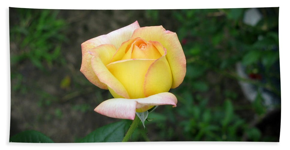 Rose Hand Towel featuring the photograph Scent Of A Rosebud by Shannon Nolting