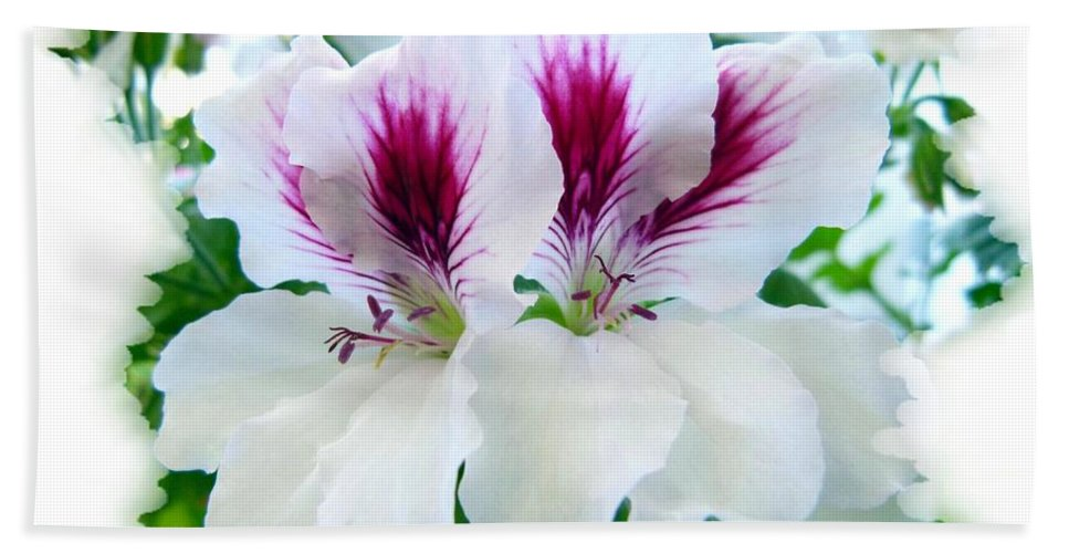 Scented Geraniums Bath Sheet featuring the photograph Scented Geraniums 2 by Will Borden
