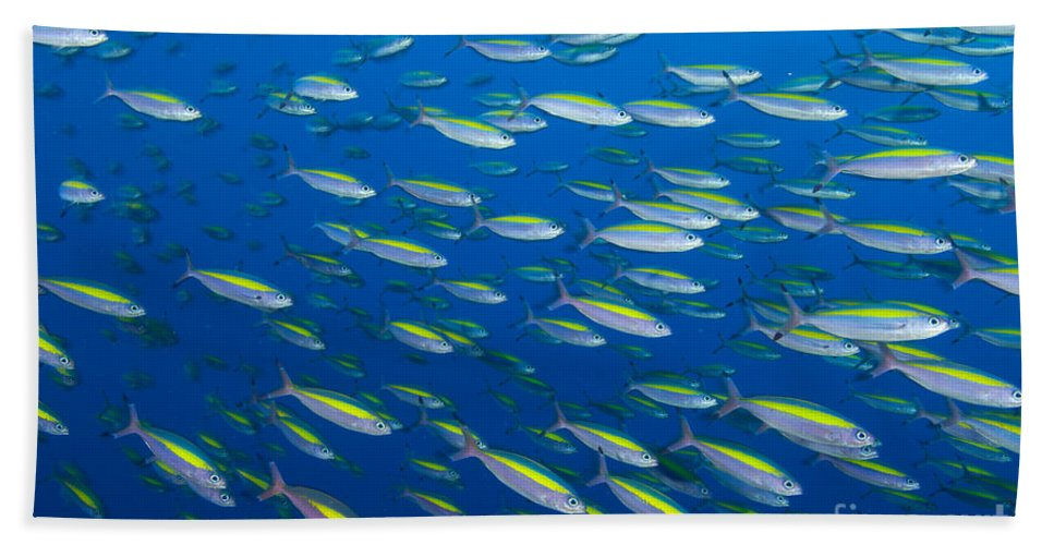 Caesionidae Bath Sheet featuring the photograph School Of Wide-band Fusilier Fish by Steve Jones