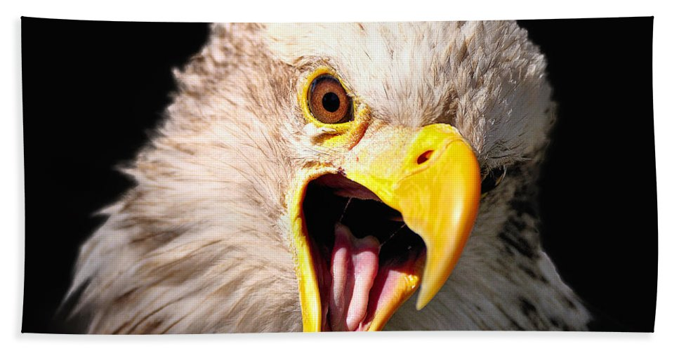 Bath Sheet featuring the photograph Screaming Eagle II Black by Bill Dodsworth