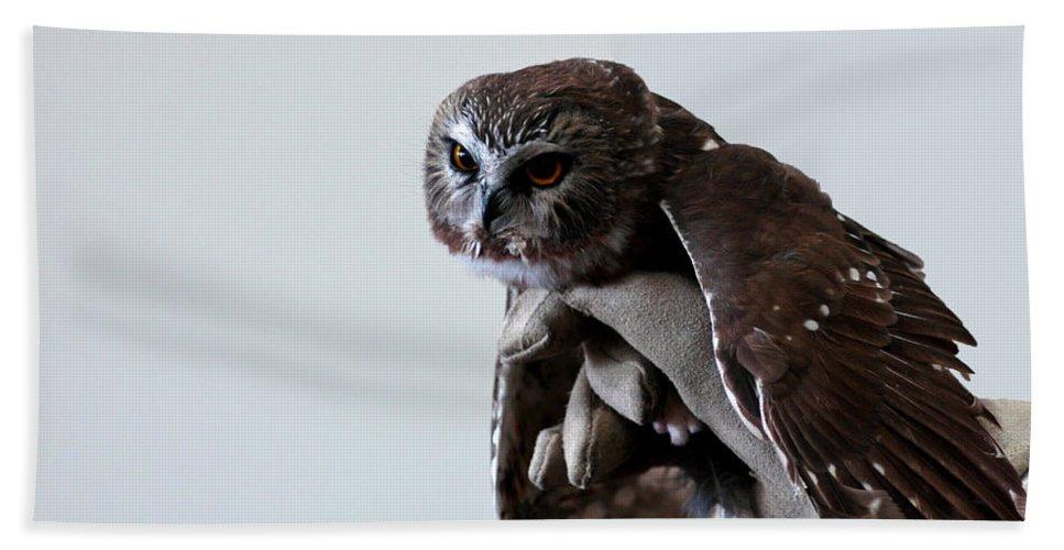 Usa Bath Sheet featuring the photograph Screech Owl by LeeAnn McLaneGoetz McLaneGoetzStudioLLCcom