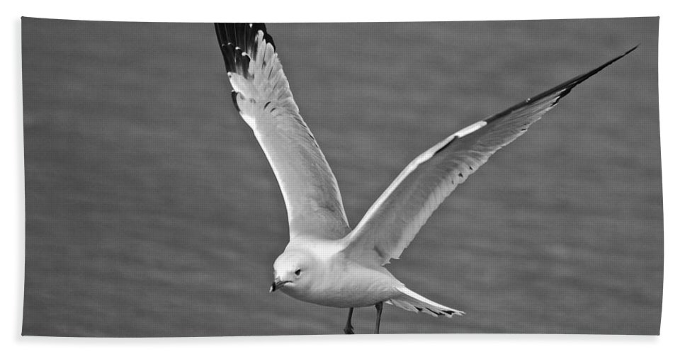 Air Hand Towel featuring the photograph Seagull In Flight by Michael Peychich