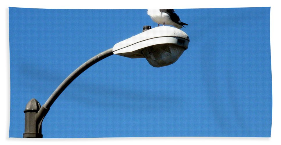 Seagull Bath Sheet featuring the photograph Seagull On Street Light by Christopher Shellhammer