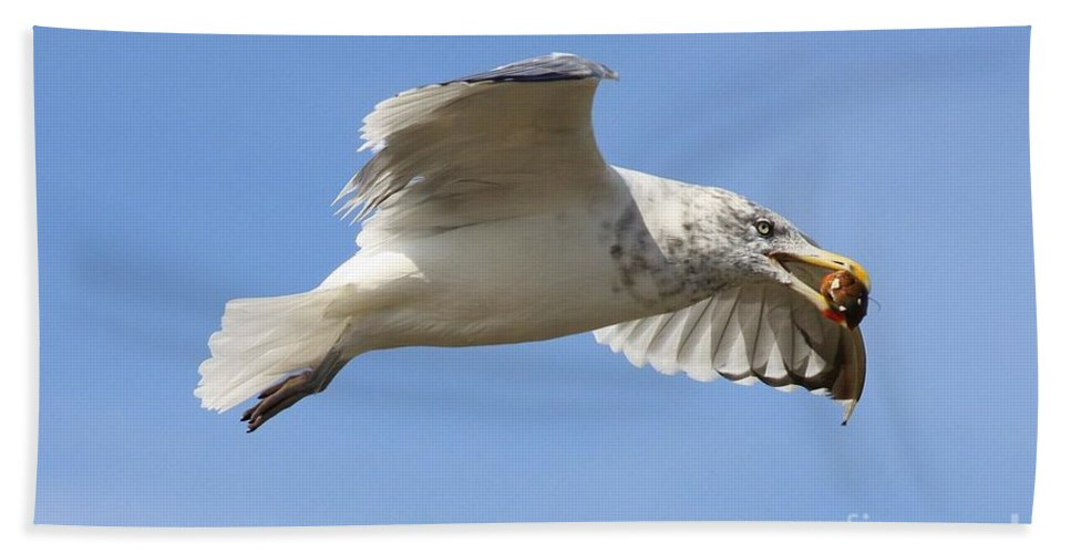 Seagull Bath Sheet featuring the photograph Seagull With Snail by Carol Groenen