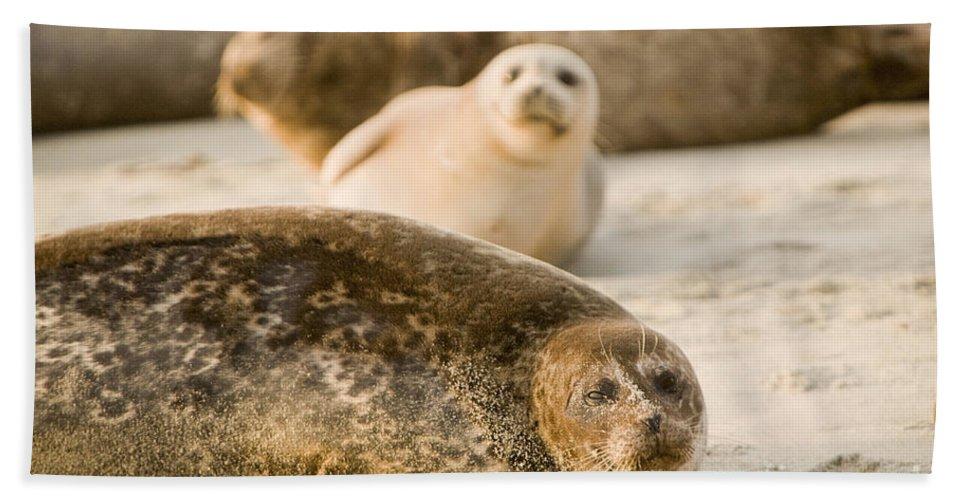 La Jolla Bath Sheet featuring the photograph Seal 3 by Daniel Knighton