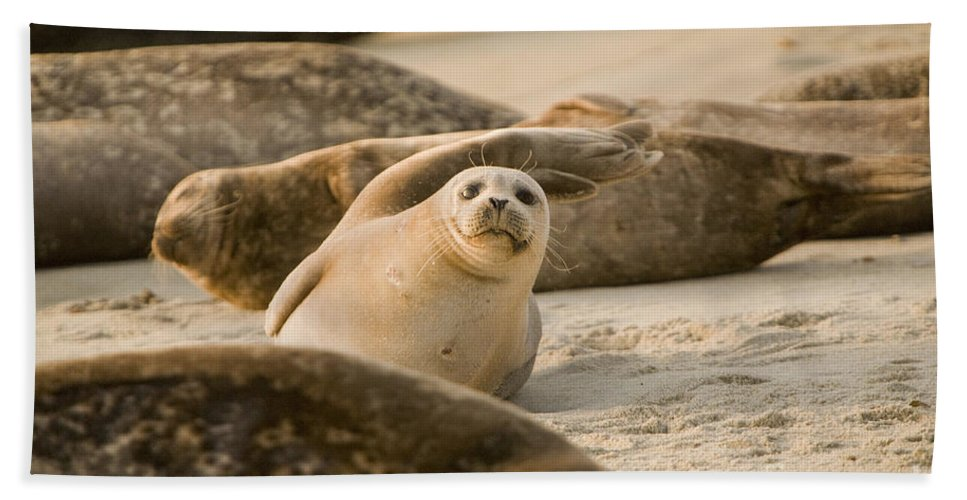 La Jolla Bath Sheet featuring the photograph Seal 4 by Daniel Knighton
