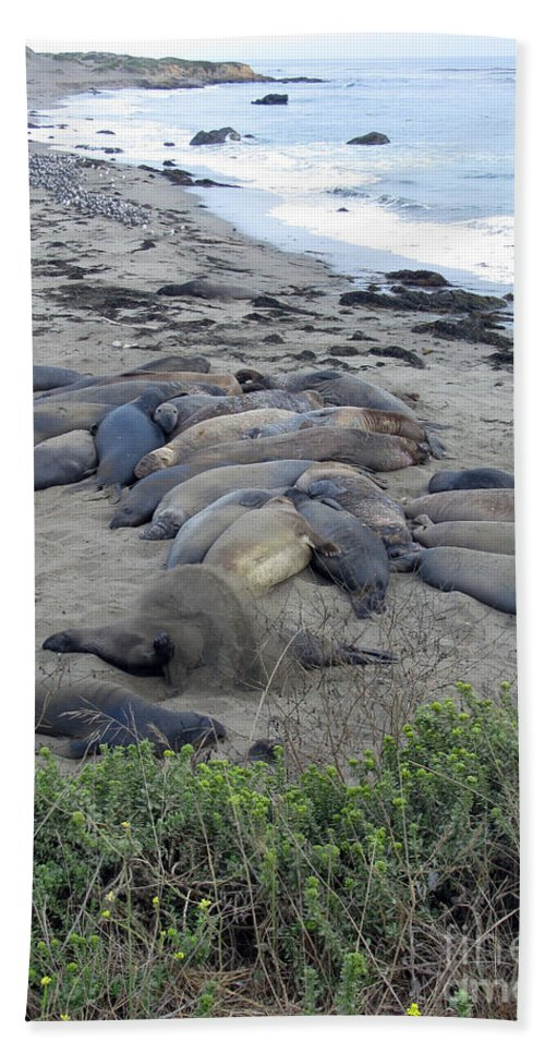 Seal Hand Towel featuring the photograph Seal Spa. Sand Bath by Ausra Huntington nee Paulauskaite