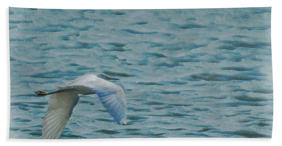 Birds Bath Sheet featuring the photograph Searching by Ernie Echols