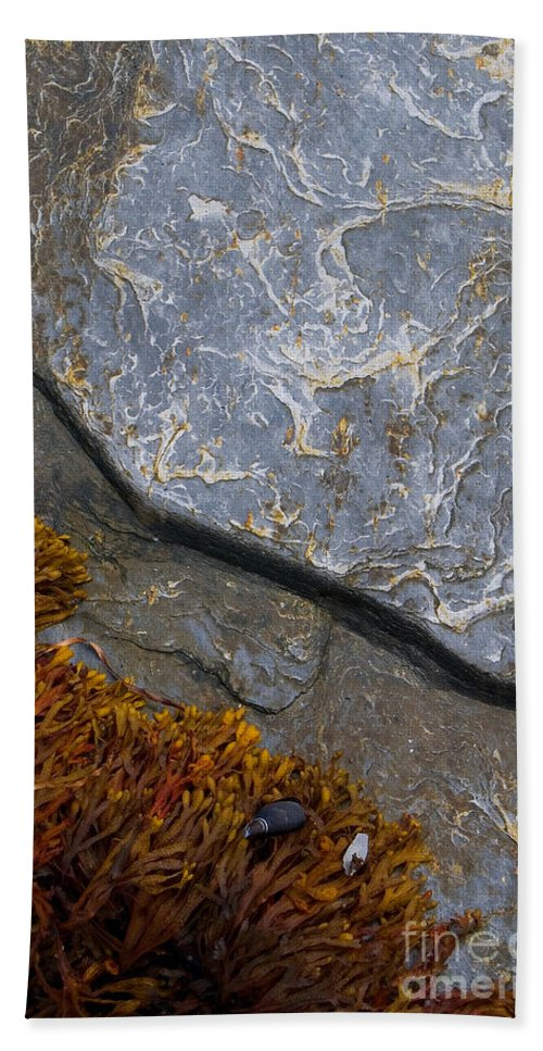 Seaweed Bath Sheet featuring the photograph Seaweed And Rock by Mike Nellums