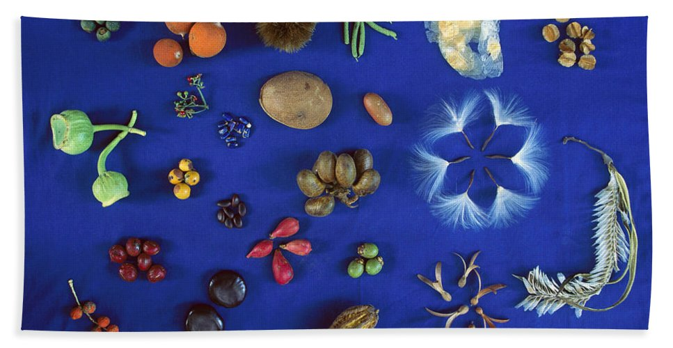Mp Hand Towel featuring the photograph Seed Diversity, Barro Colorado Island by Christian Ziegler