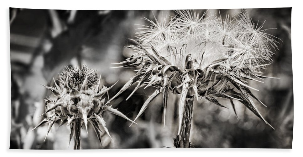Seeds Hand Towel featuring the photograph Seedy Neighborhood In Bw by Kelley King