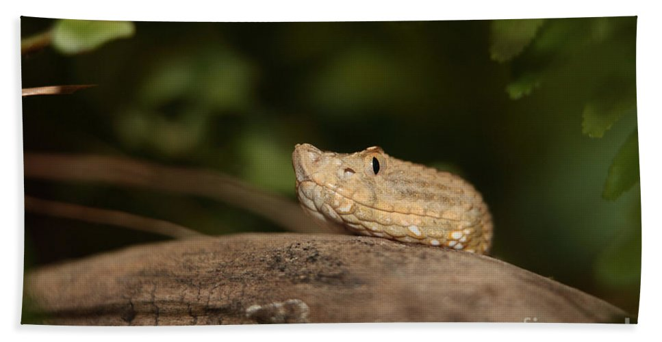 Adder Bath Sheet featuring the photograph Seeing Me Seeing You Ah Ha by Alan Look