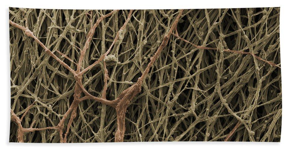 Mycelium Hand Towel featuring the photograph Sem Of Mycelium On Mushrooms by Ted Kinsman