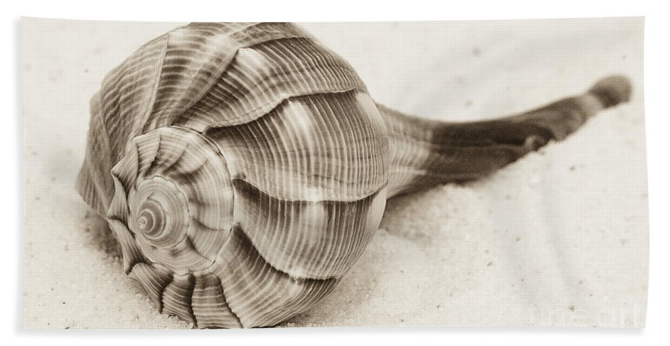 Shell Bath Sheet featuring the photograph Sepia Shell by Jim And Emily Bush