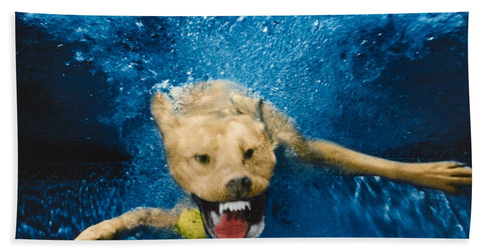 Dog Hand Towel featuring the photograph Shark Attack by Jill Reger