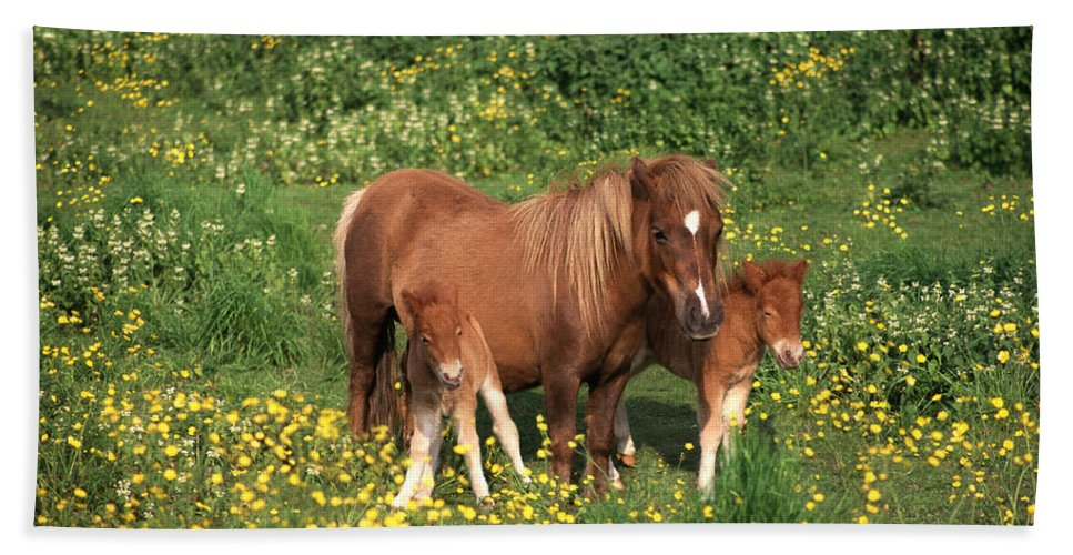 Animal Hand Towel featuring the photograph Shetland Pony With Foal Twins by Mark Taylor