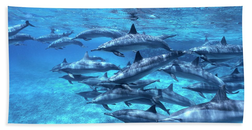 00283200 Hand Towel featuring the photograph Short-beaked Common Dolphin Delphinus by Hans Leijnse