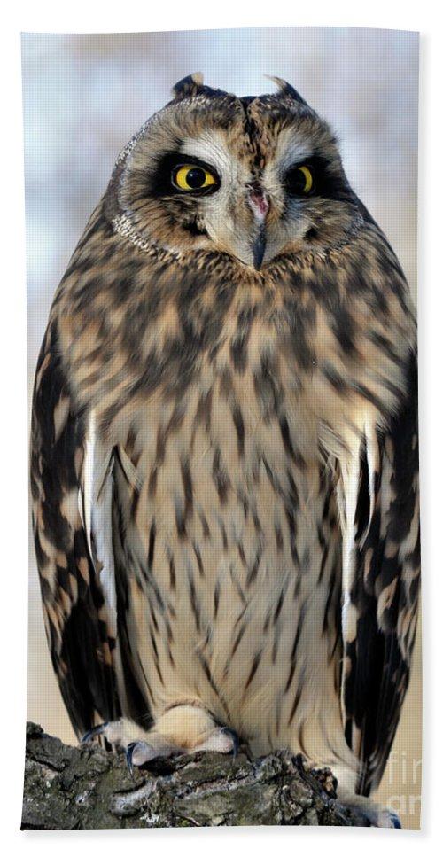 Owl Bath Sheet featuring the photograph Short-eared Owl by Ronald Grogan