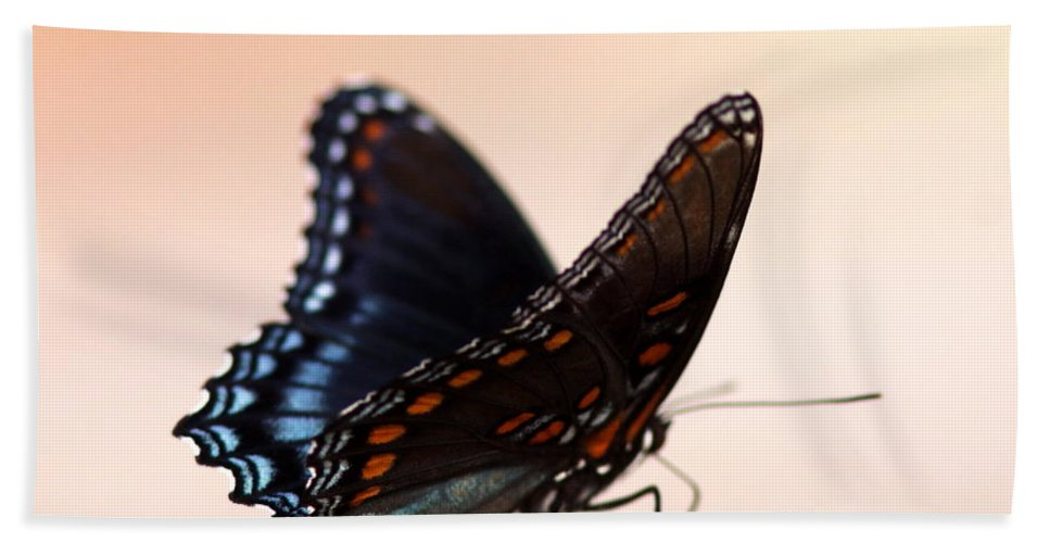 Swallowtail Butterfly Bath Sheet featuring the photograph Showing Colors by Travis Truelove