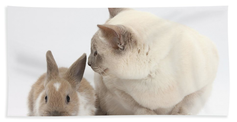 Nature Hand Towel featuring the photograph Siamese-cross Cat, Isaac, And Baby by Mark Taylor