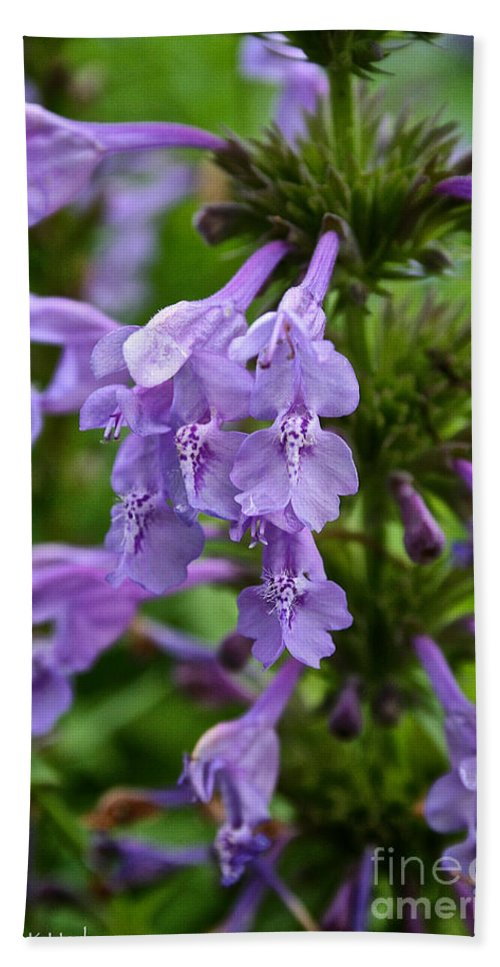 Floral Bath Sheet featuring the photograph Siberian Catmint by Susan Herber