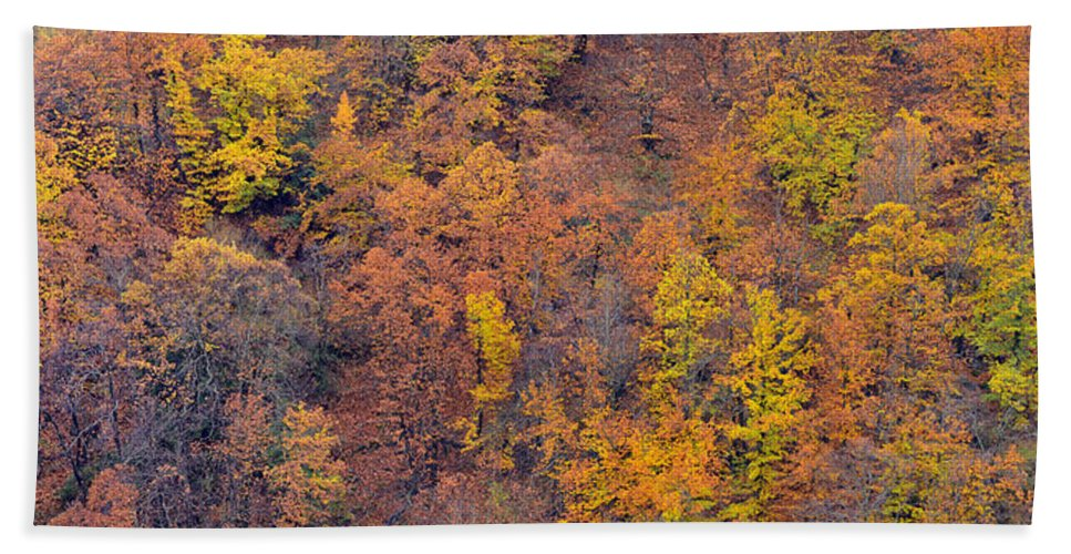 Trees Bath Sheet featuring the photograph Sierra Nevada National Park by Guido Montanes Castillo