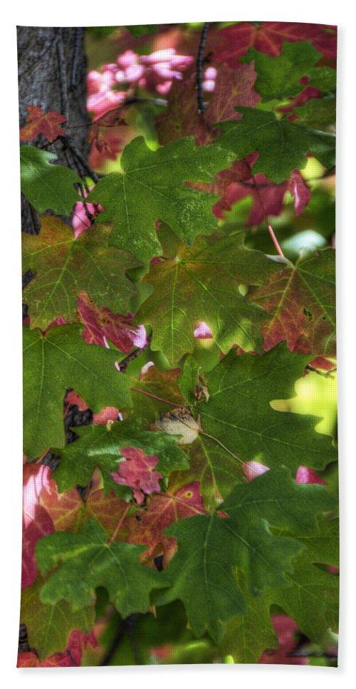 Autumn Bath Sheet featuring the photograph Signs Of Autumn by Saija Lehtonen
