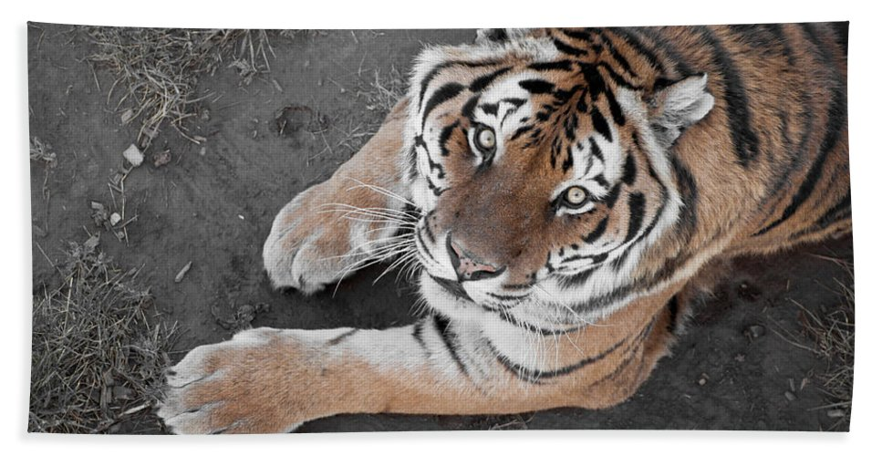 Wild Bath Sheet featuring the photograph Silent Stare by Colleen Coccia